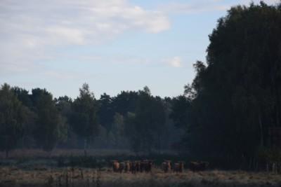 Die Herde im neuen Territorium