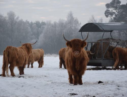 Die Highlands haben sich eingelebt