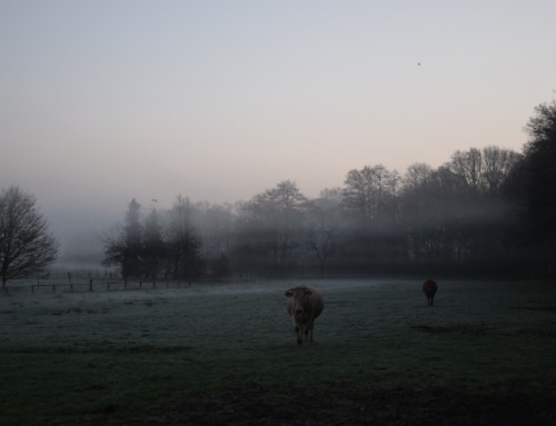 Morgenstimmung auf der Weide